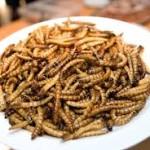 hmyzí talíř